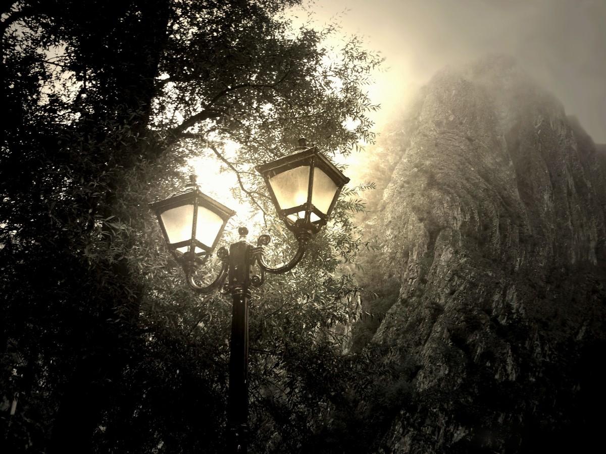 Free Images Landscape Forest Light Girl Night