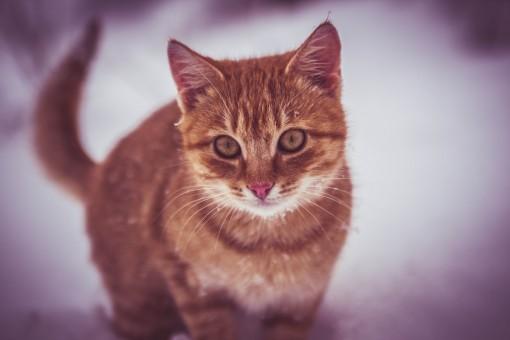 Schnee,Kätzchen,Katze,Säugetier,spielen,Fauna