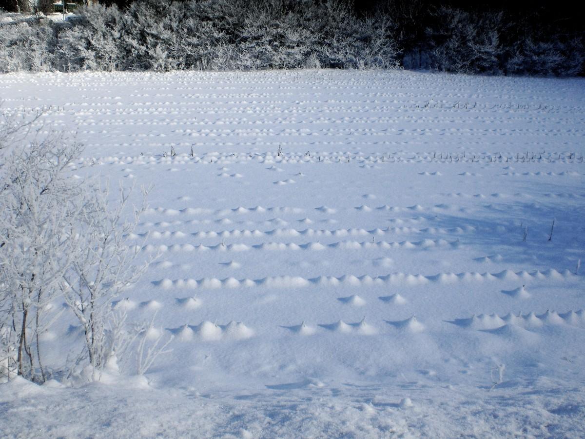 нормального картинки поля в снегу концу курса вас