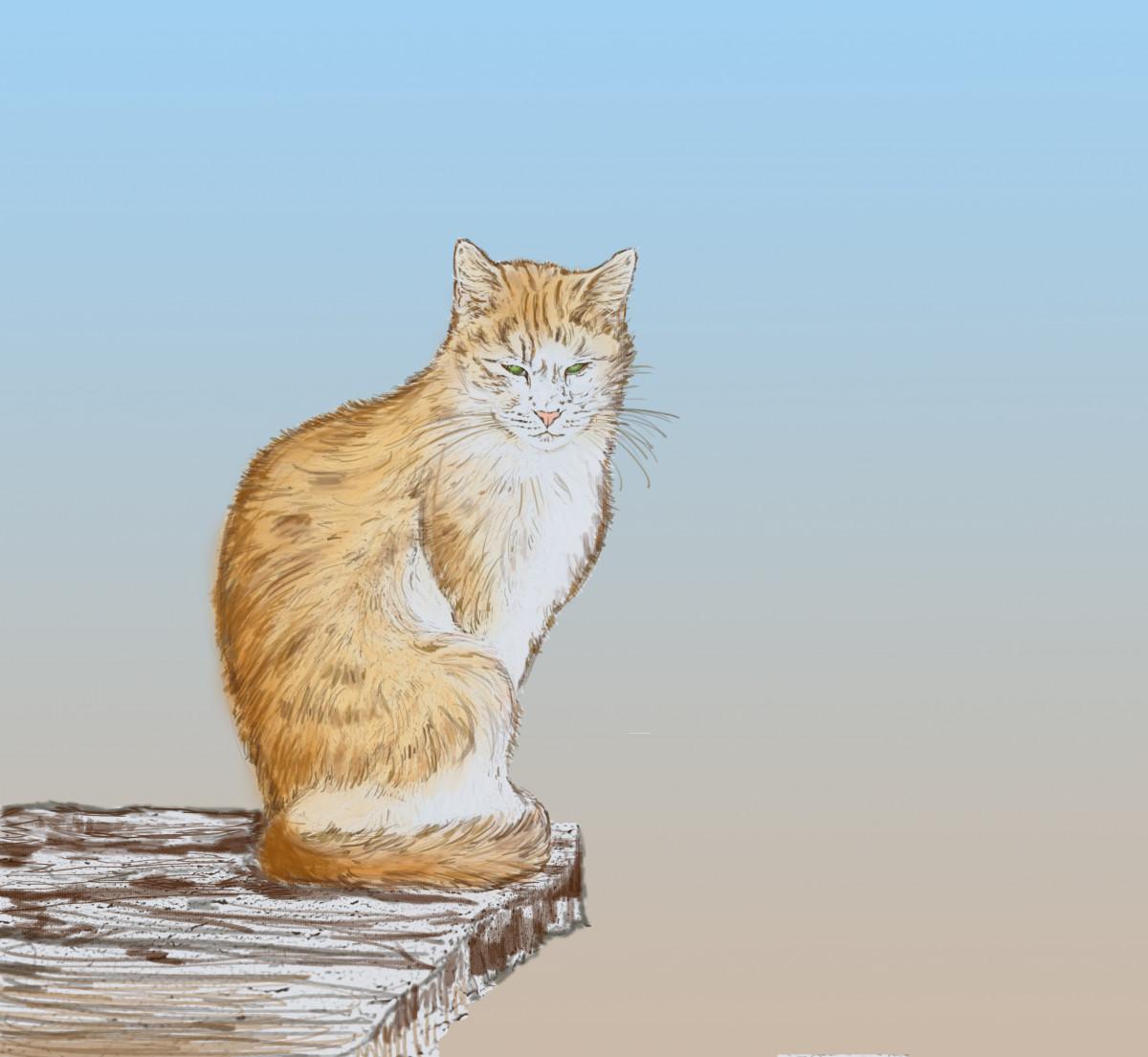 Gambar Kucing Sketsa Ilustrasi Obrolan Katze Skizze