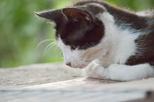 Čierne Les mačička