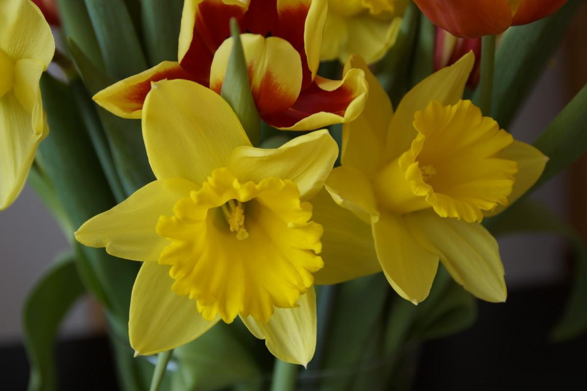 Подарок цветок нарцисс 92