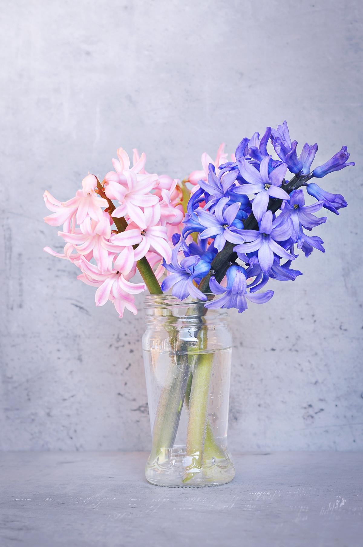 Free Images Number Color Close Blue Flower Font Art Shield