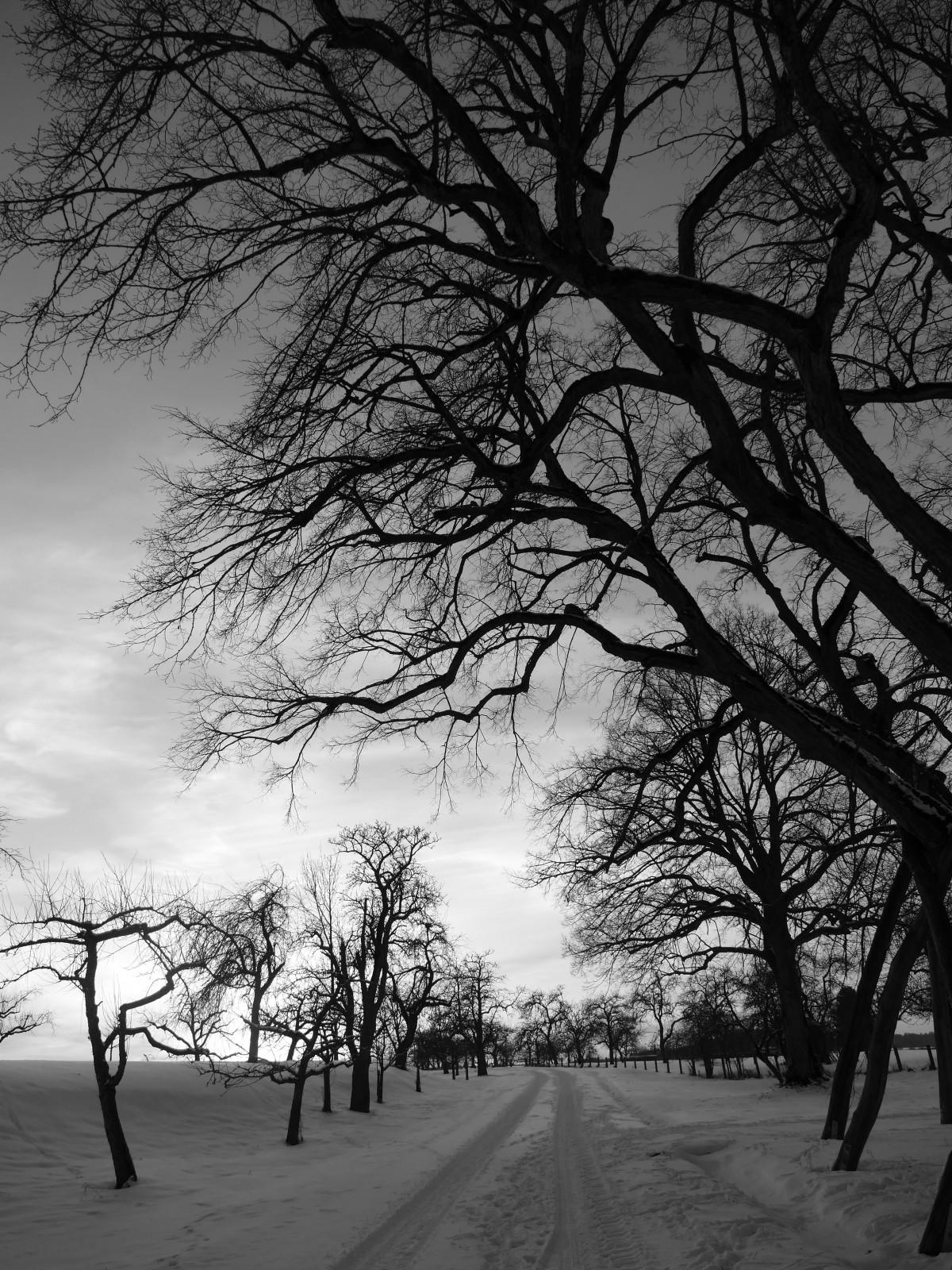 images gratuites paysage arbre la nature branche neige hiver noir et blanc plante. Black Bedroom Furniture Sets. Home Design Ideas