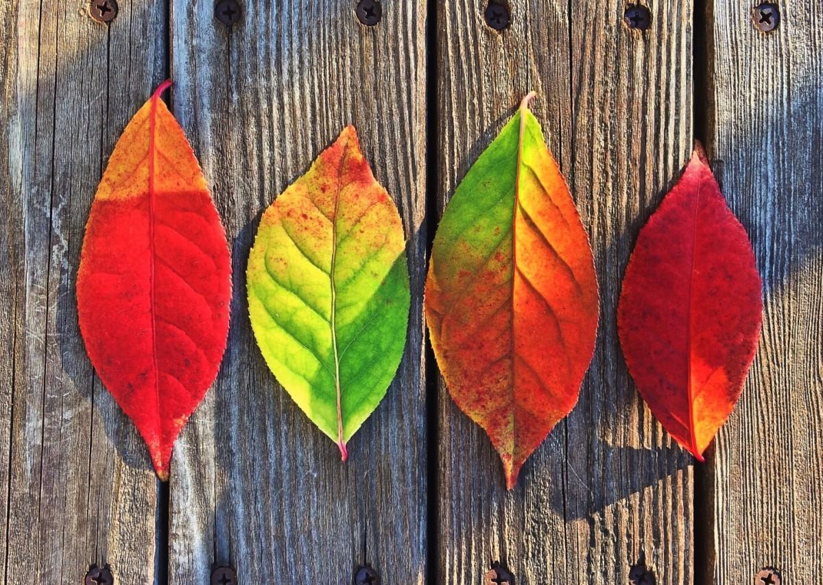 Fotos Gratis : árbol, Rama, Planta, Otoño, Flor, Rojo