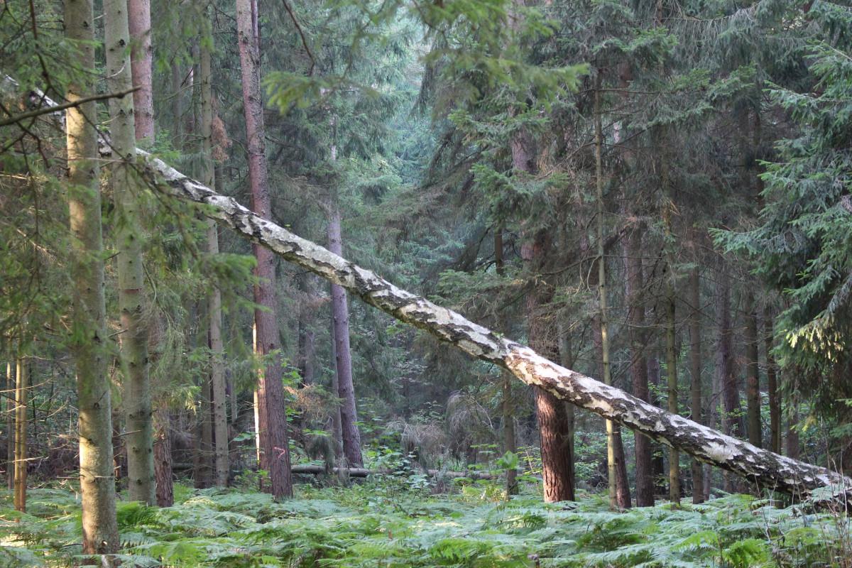 Gratis afbeeldingen boom natuur bos tak brug hangbrug oerwoud vegetatie regenwoud - Leefgebied canape ...