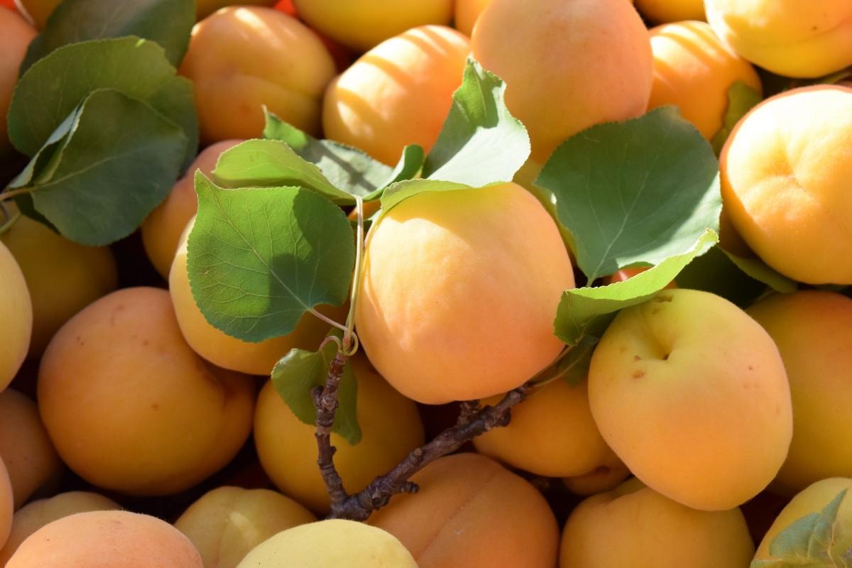 lumière plante Soleil fruit doux mûr aliments produire légume en bonne santé abricot fruits Vitamines Frisch Persimmon Diospyros Kernobstgewaechs Abricots plante à fleurs Rose famille Plante terrestre