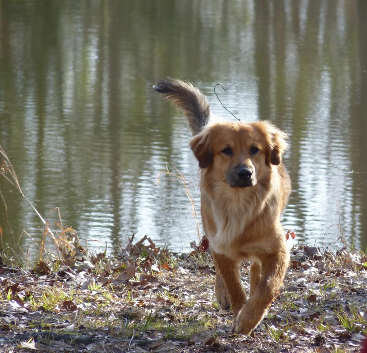 fotos gratis naturaleza perrito perro canino ladrar