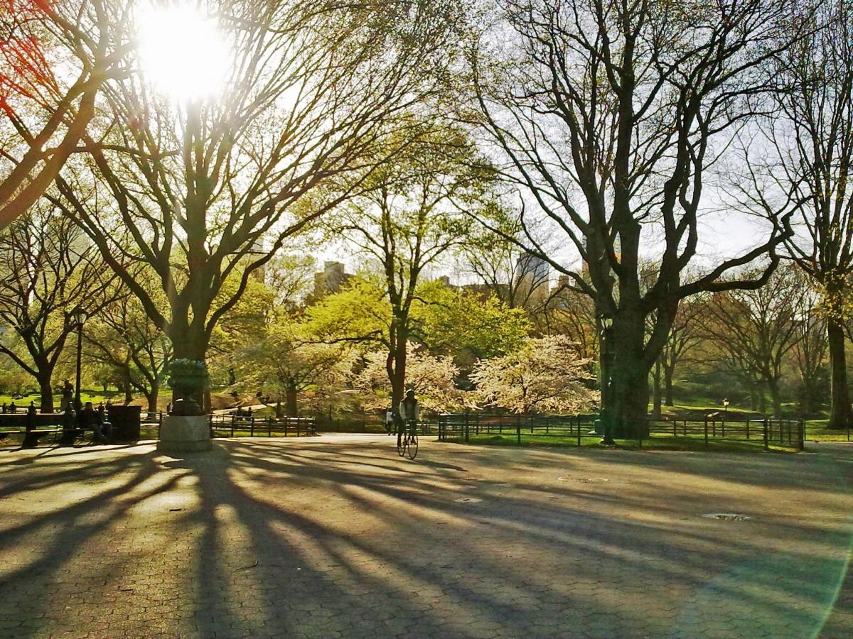 Images gratuites paysage arbre herbe plante pelouse feuille fleur banlieue rouge l - Quand planter de la pelouse ...