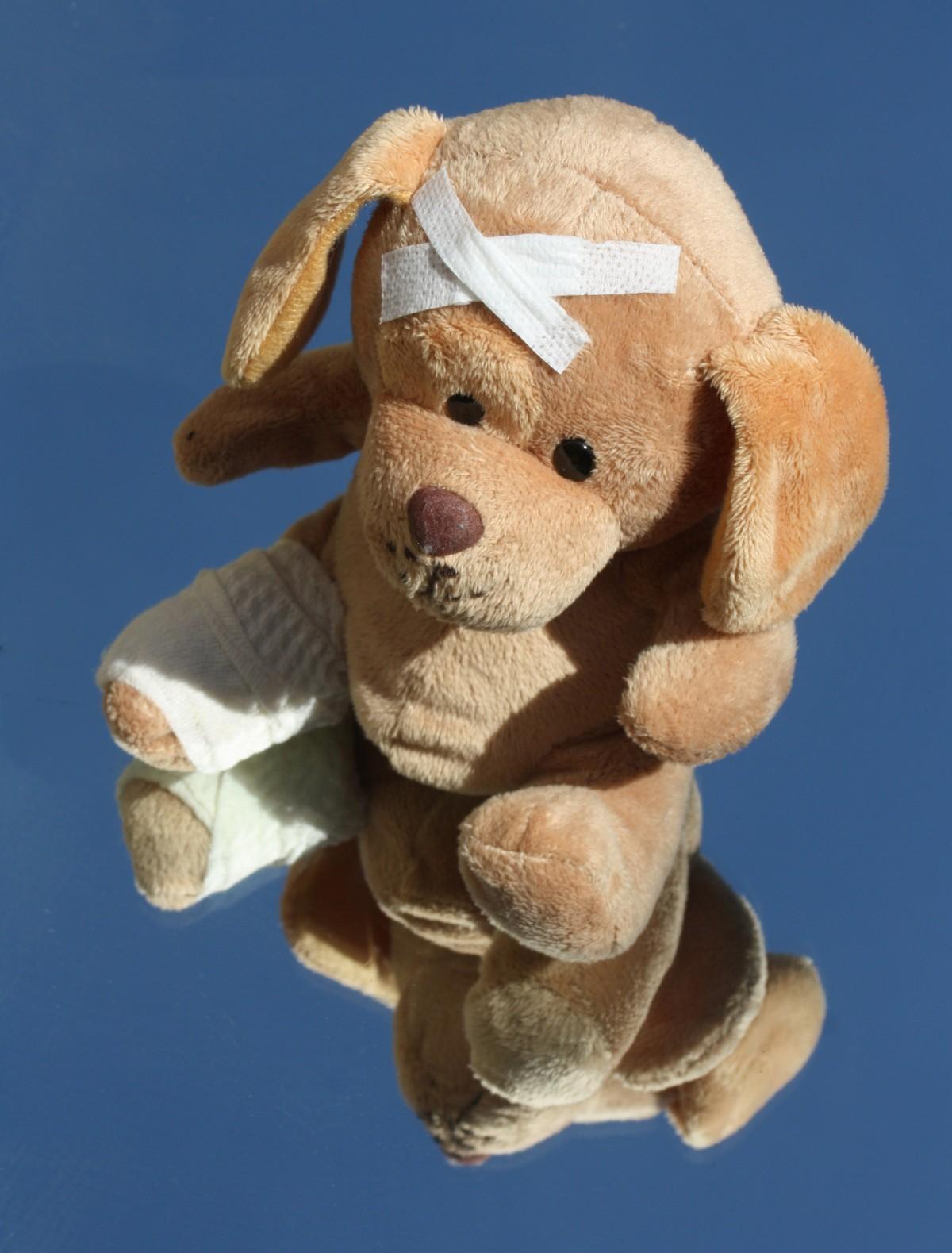 Free Images Dog Leg Arm Flowers Teddy Bear Product