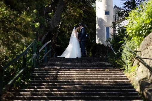 escalera,árbol,luz de sol,flor,amor,otoño