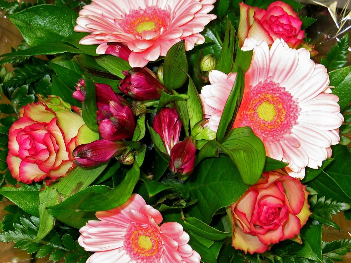 Images gratuites fleur amour bouquet romance jouet for Envoyer des roses