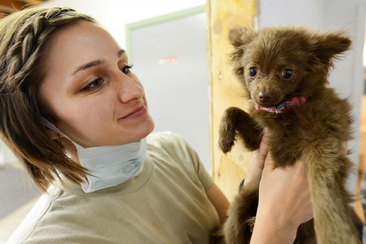 hand, woman, puppy, dog, cute, canine, female, fur, portrait, mammal, care, health, nose, skin, doctor, pomeranian, medical, veterinarian, interaction, examination, vet, checkup, dog like mammal, dog breed group