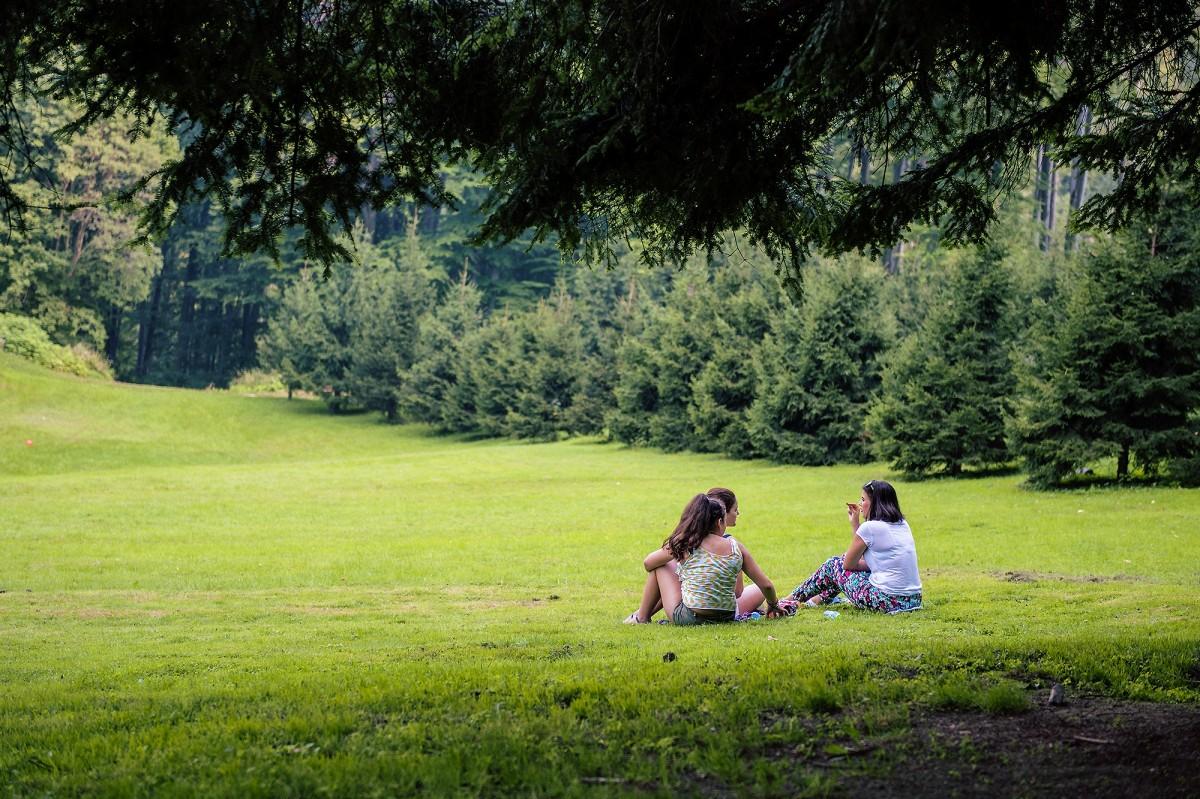Free Images : nature, outdoor, bird, sunlight, wildlife ...
