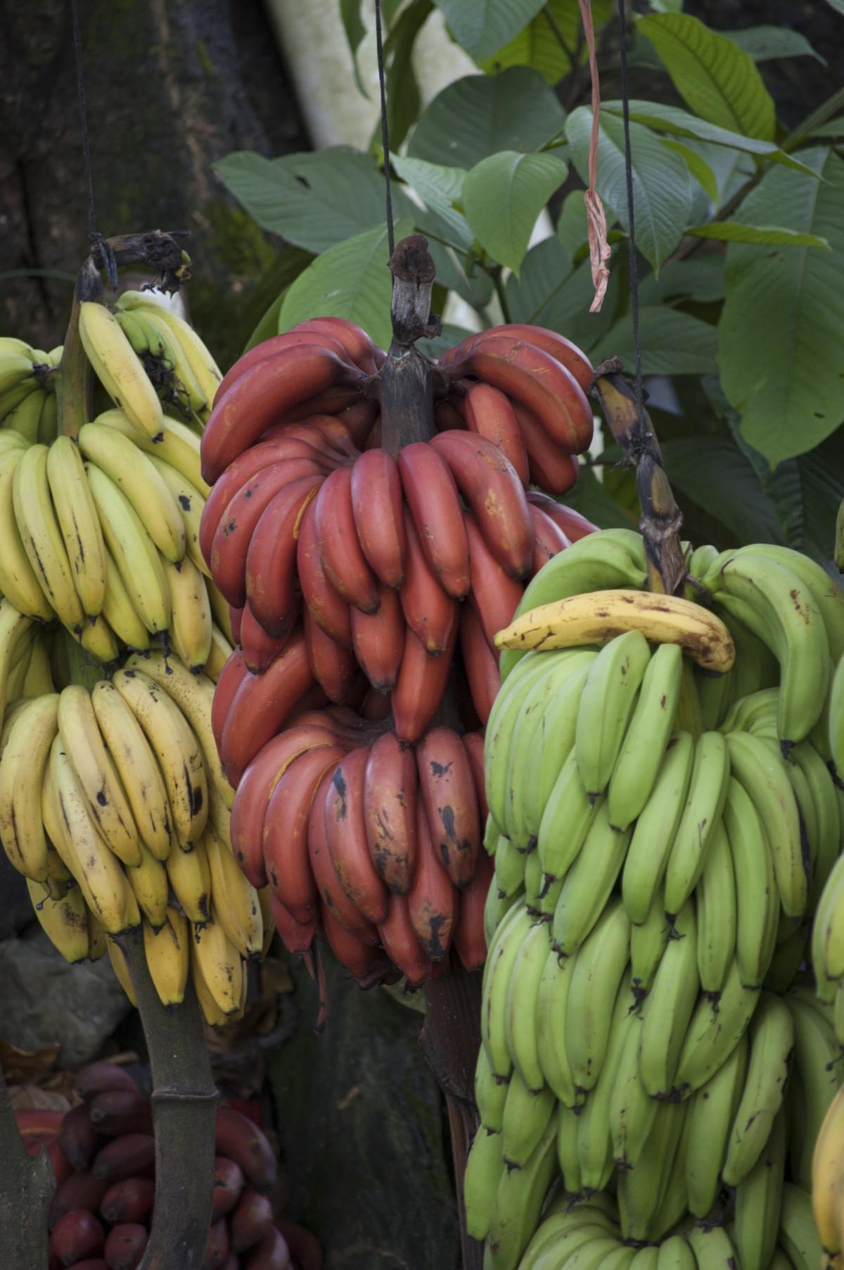 Gratis billeder natur blad blomst mad gr n r d - Plante jungle ...