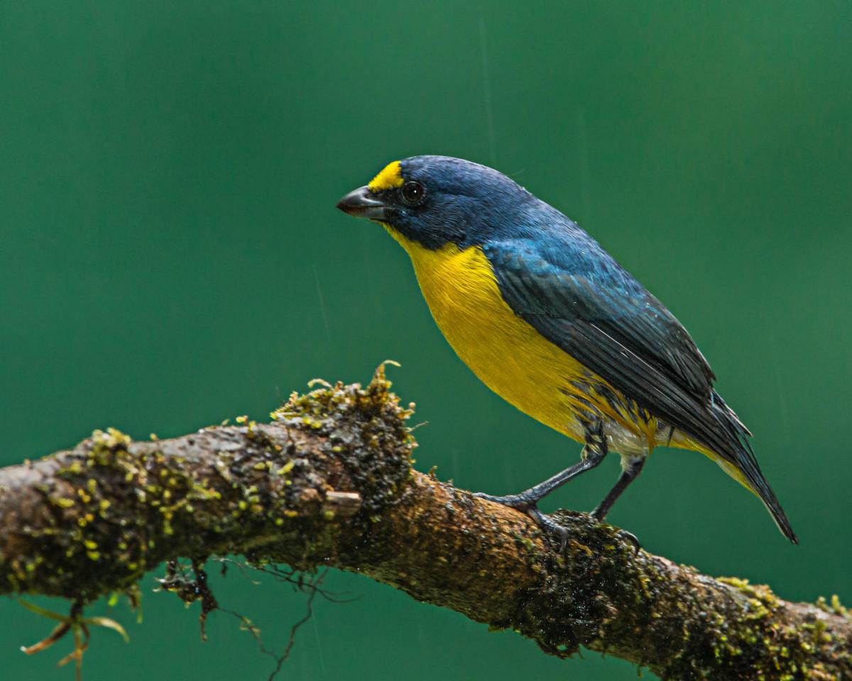 Images gratuites la nature branche oiseau faune le for Oiseau par la couleur