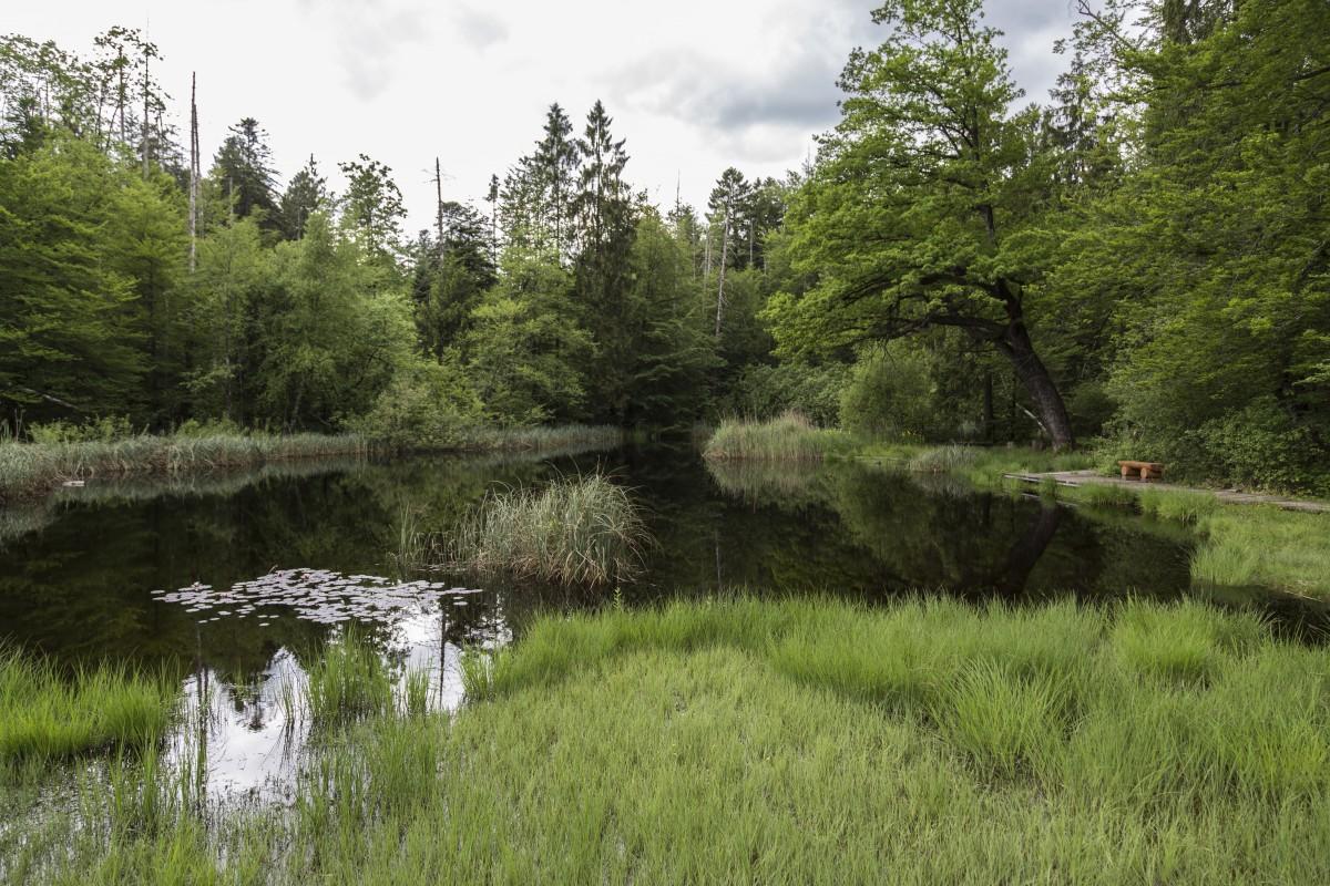 free images marsh swamp meadow lake paddle