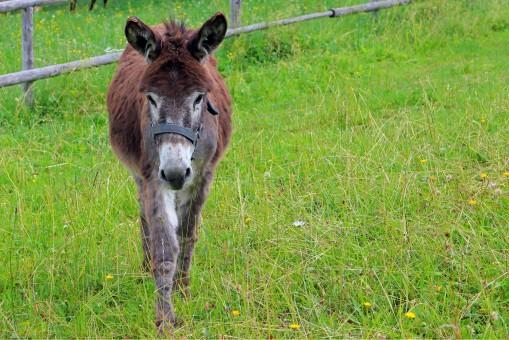 Free Images  Nature, Sharp, Love, Fauna, Climb, Donkey -3776