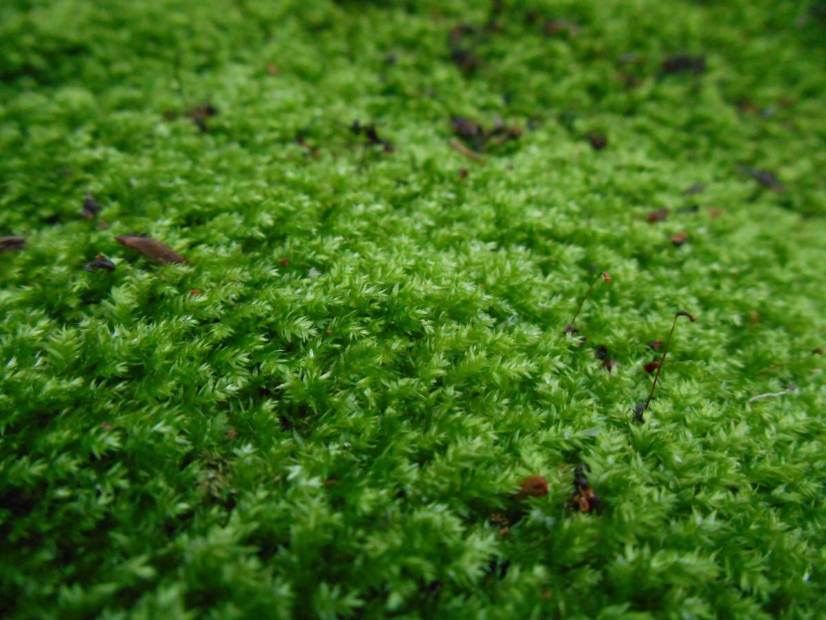 Images gratuites la nature herbe pelouse feuille for Supprimer la mousse de la pelouse