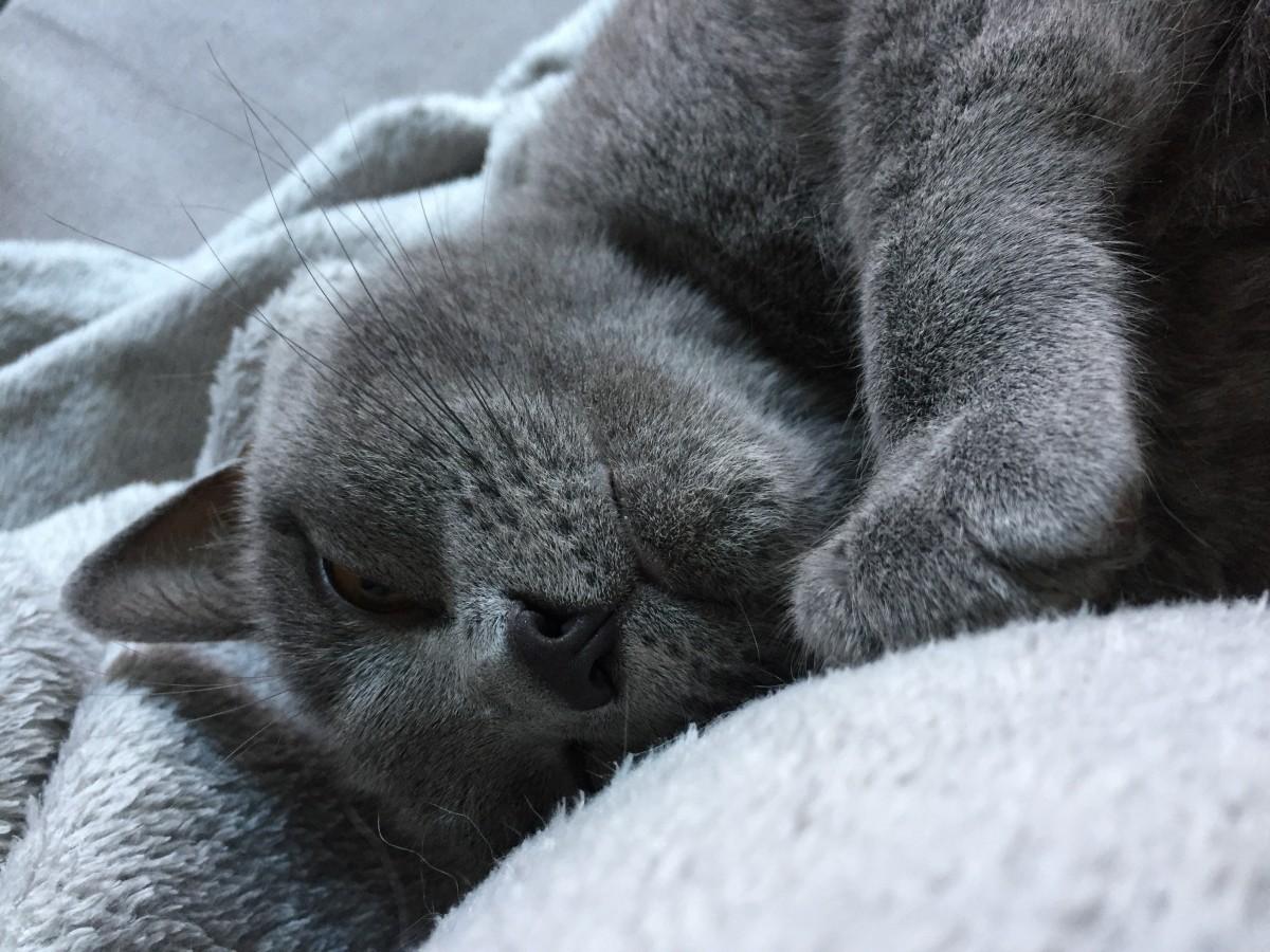 Добрым, приятного отдыха картинки с британским котом