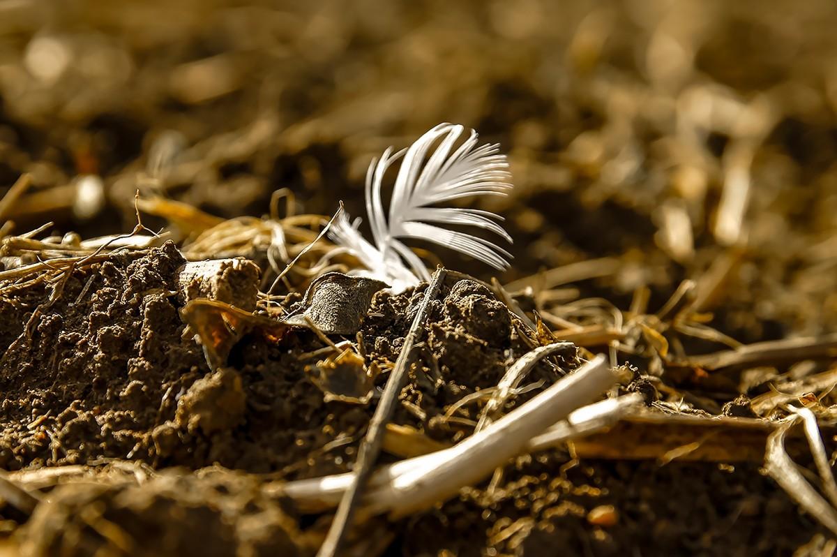 Gratis afbeeldingen landschap natuur zand rots structuur veld grond asfalt vruchtbaar - Tuin grind decoratief ...