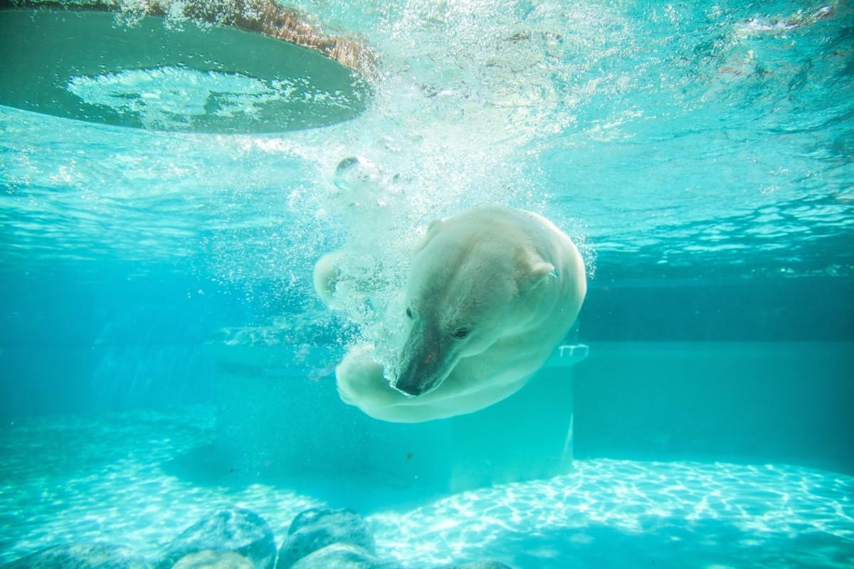 Free Images : Sea, Water, Ocean, Animal, Underwater, Polar