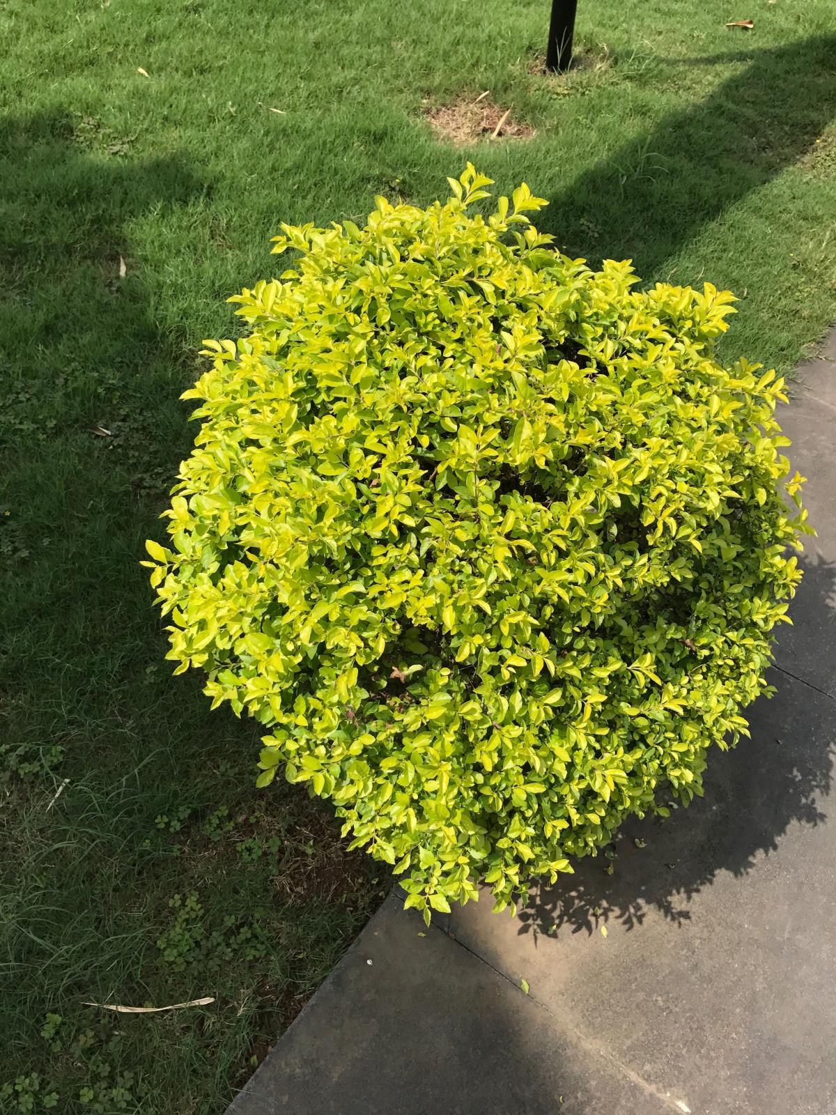 Images Gratuites : arbre, feuille, fleur, vert, à feuilles persistantes, botanique, jaune ...
