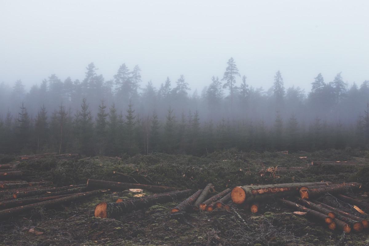 LULUCF-Emissionen sind ab 2021 verboten. Die Bewirtschaftung von Waldflächen bietet bilanzielles Potential