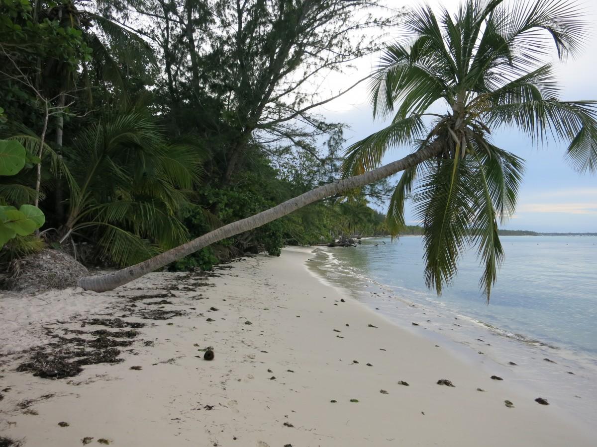 ビーチ, 海, 海岸, 木, 海岸, 川, パラダイス, 休日, 水域, カリブ海, 生息地, ドミニカ共和国, 熱帯, 手のひらを傾ける, アセスメント