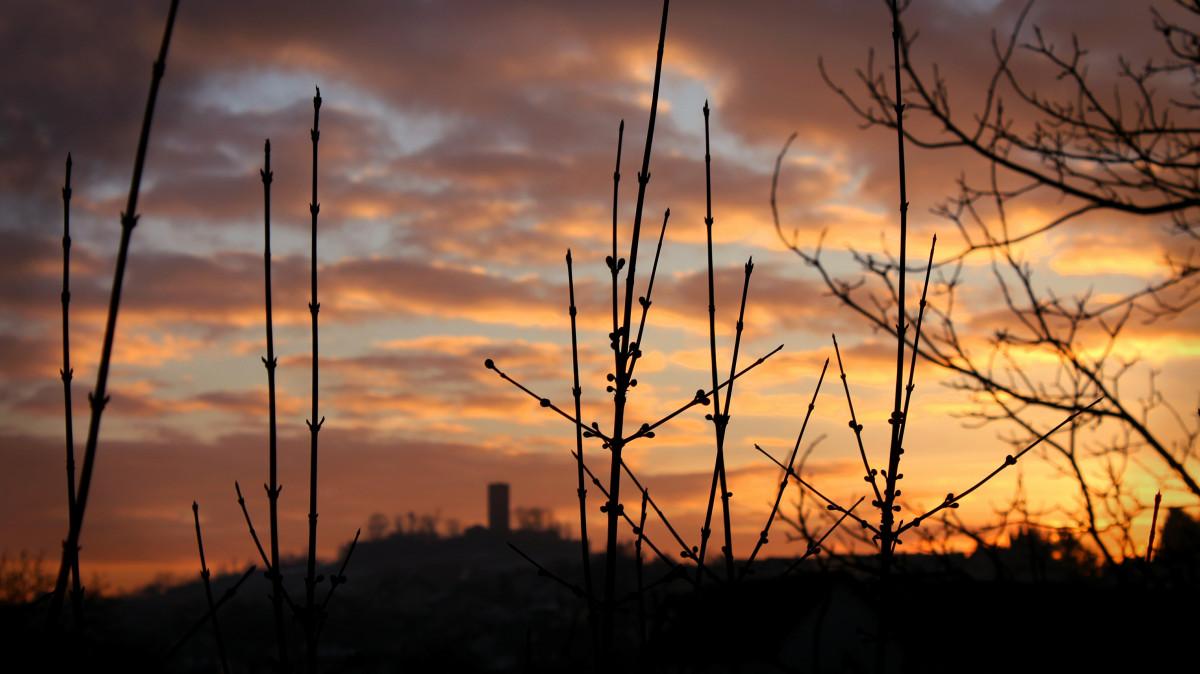 Gambar Pohon Alam Cabang Cahaya Awan Menanam Matahari Terbit Matahari Terbenam Bidang Padang Rumput Sinar Matahari Melihat Fajar Panorama Gelap Senja Malam Kastil Estetis Fokus Suasana Hati Perasaan Senang Sesudah Mengalami
