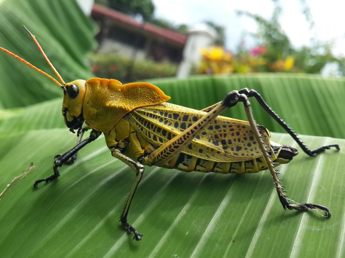 Картинки маша, картинка с насекомыми
