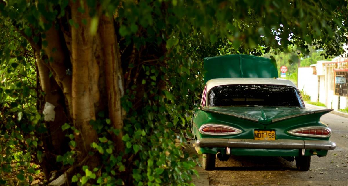 images gratuites arbre for t voiture cru fleur vert v hicule l 39 automne domaine public. Black Bedroom Furniture Sets. Home Design Ideas