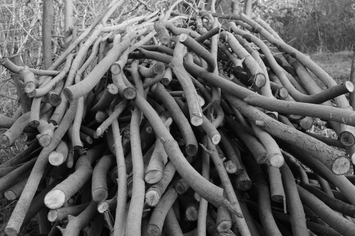 무료 이미지 : 유목, 나무, 분기, 검정색과 흰색, 목재, 트렁크 ...