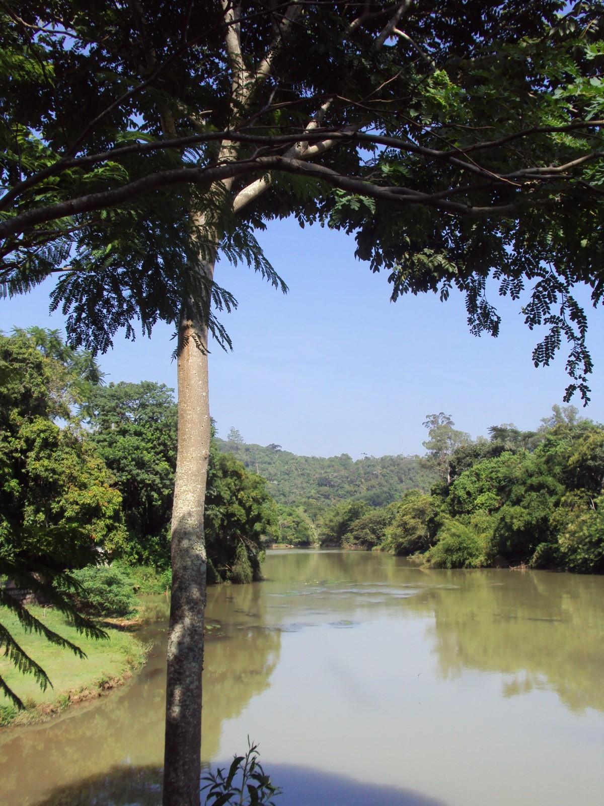images gratuites arbre la nature branche oiseau feuille fleur tang faune jungle le. Black Bedroom Furniture Sets. Home Design Ideas