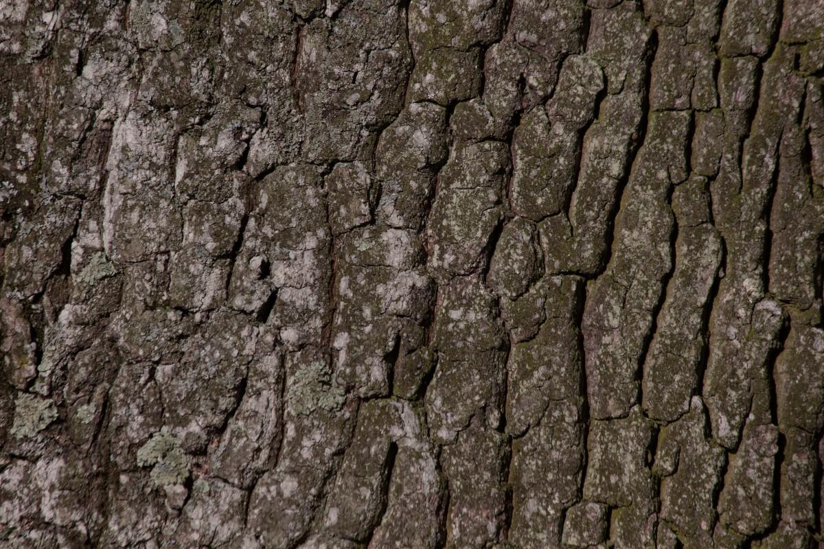 무료 이미지 : 자연, 록, 분기, 목재, 포도주, 조직, 잎, 트렁크, 벽 ...