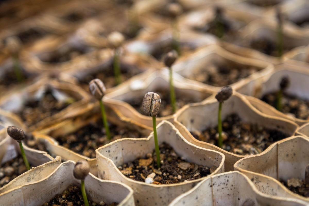 macro nursery plants seedlings sprouts