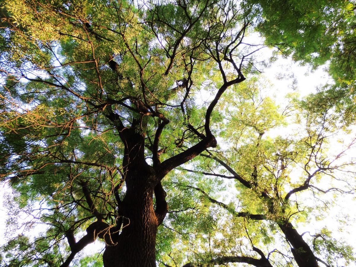 Gratis afbeeldingen boom fabriek blad zomer herfst park plantkunde tuin vakantie - Leefgebied canape ...