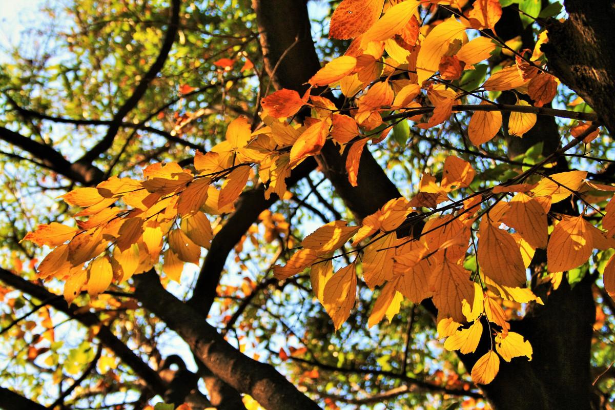 Поздравление с посадкой деревьев предоставляет