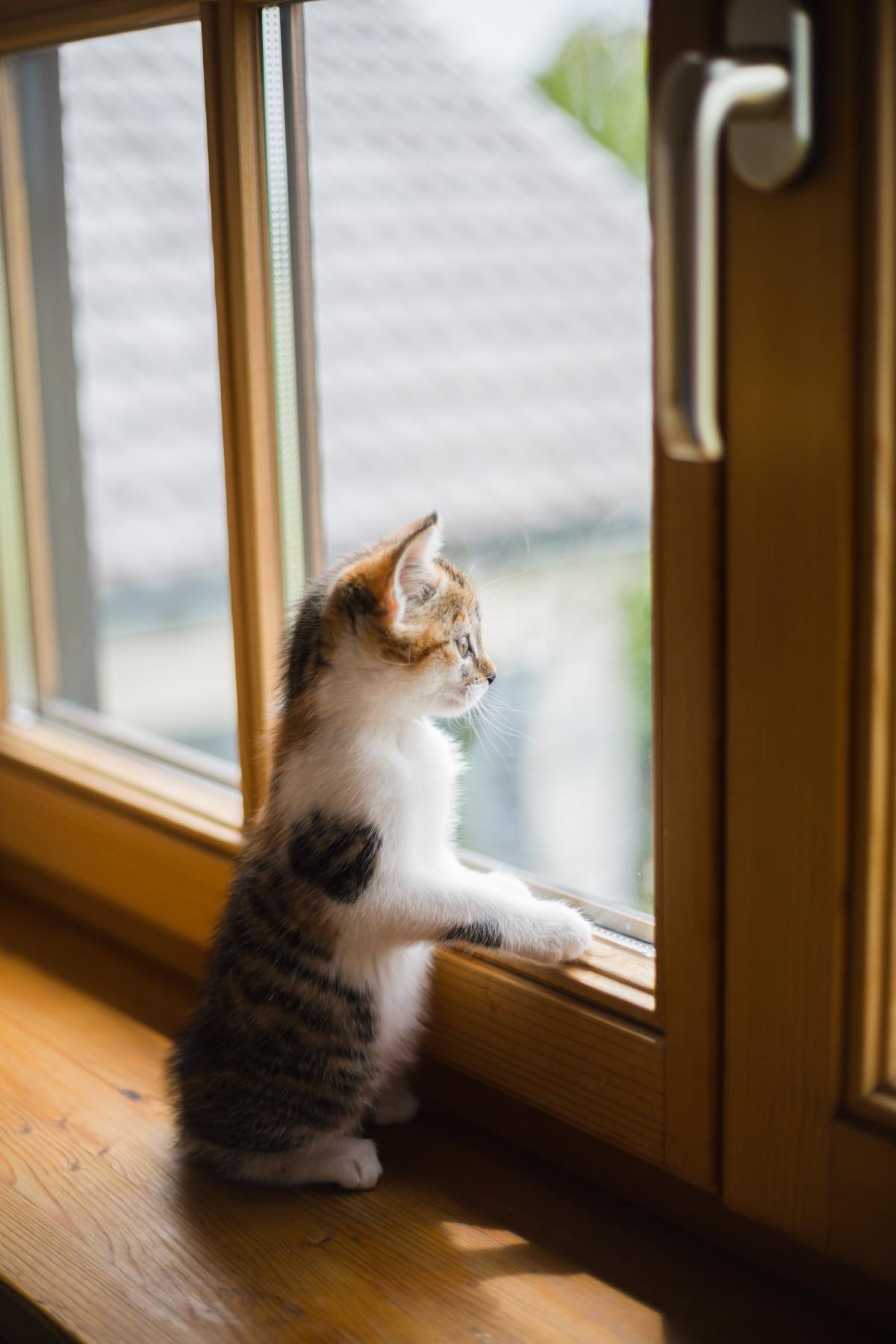 его милая картинка окно нежного