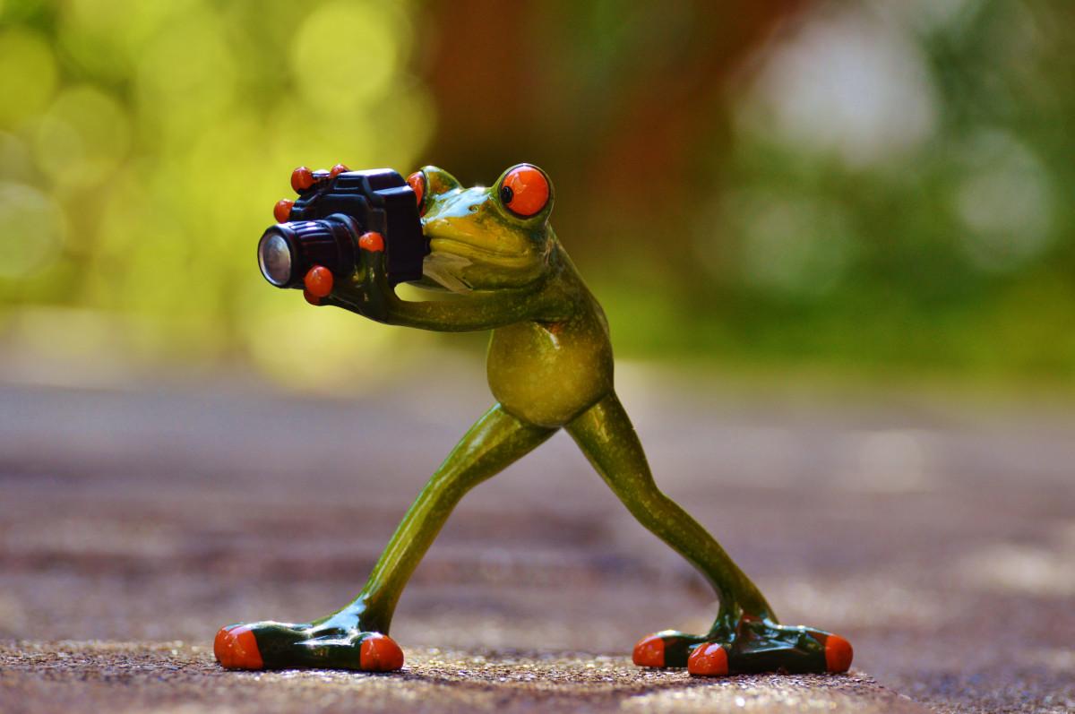 caméra photographe animal vert grenouille amphibie jouet amusement photographier drôle le monde animal
