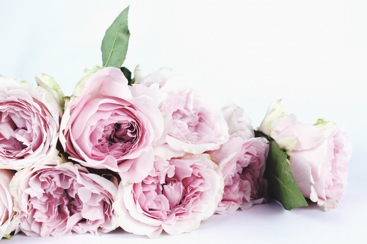 Free Images Nature Blossom Petal Bloom Flora Instagram