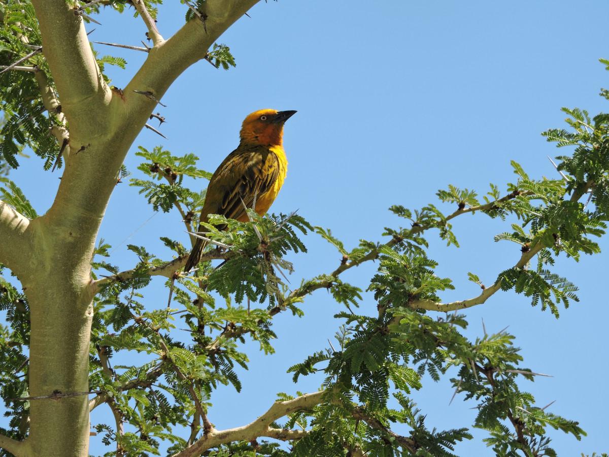 Bakgrundsbilder tr d natur gren vinter vilda djur och v xter v r n bb h st fauna - Eloigner les oiseaux des arbres fruitiers ...