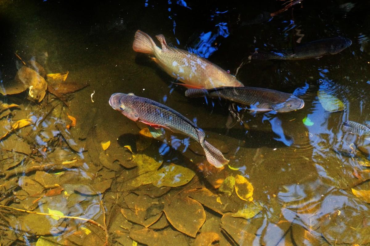 Foto raf g let y zmek biyoloji bal k l fauna for Saltwater fish pond