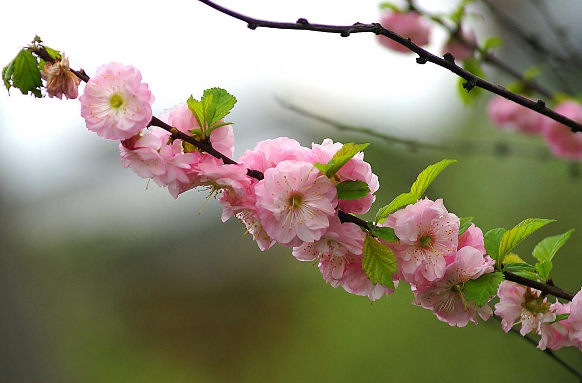 Free Images Nature Branch Fruit Flower Petal