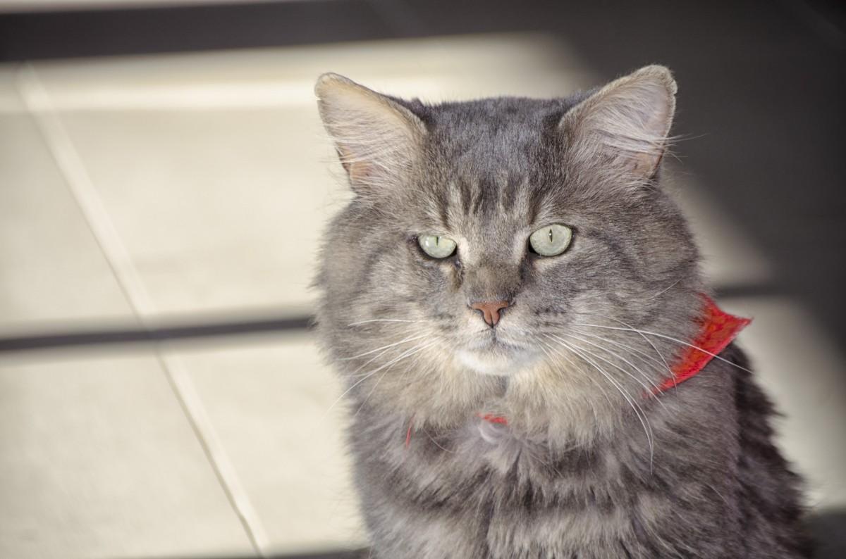 Sit de chat en ligne sans inscription