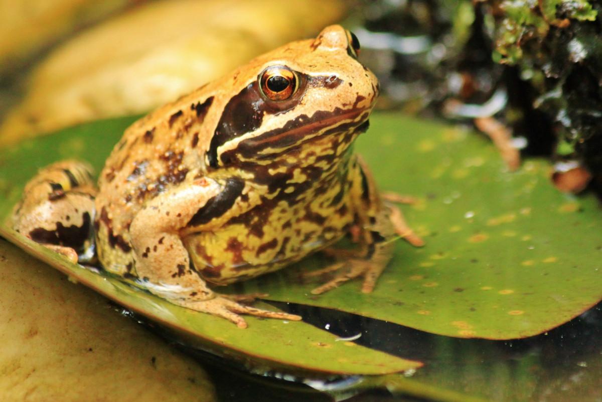 Kostenlose foto wasser tier teich tierwelt gr n for Backyard pond animals