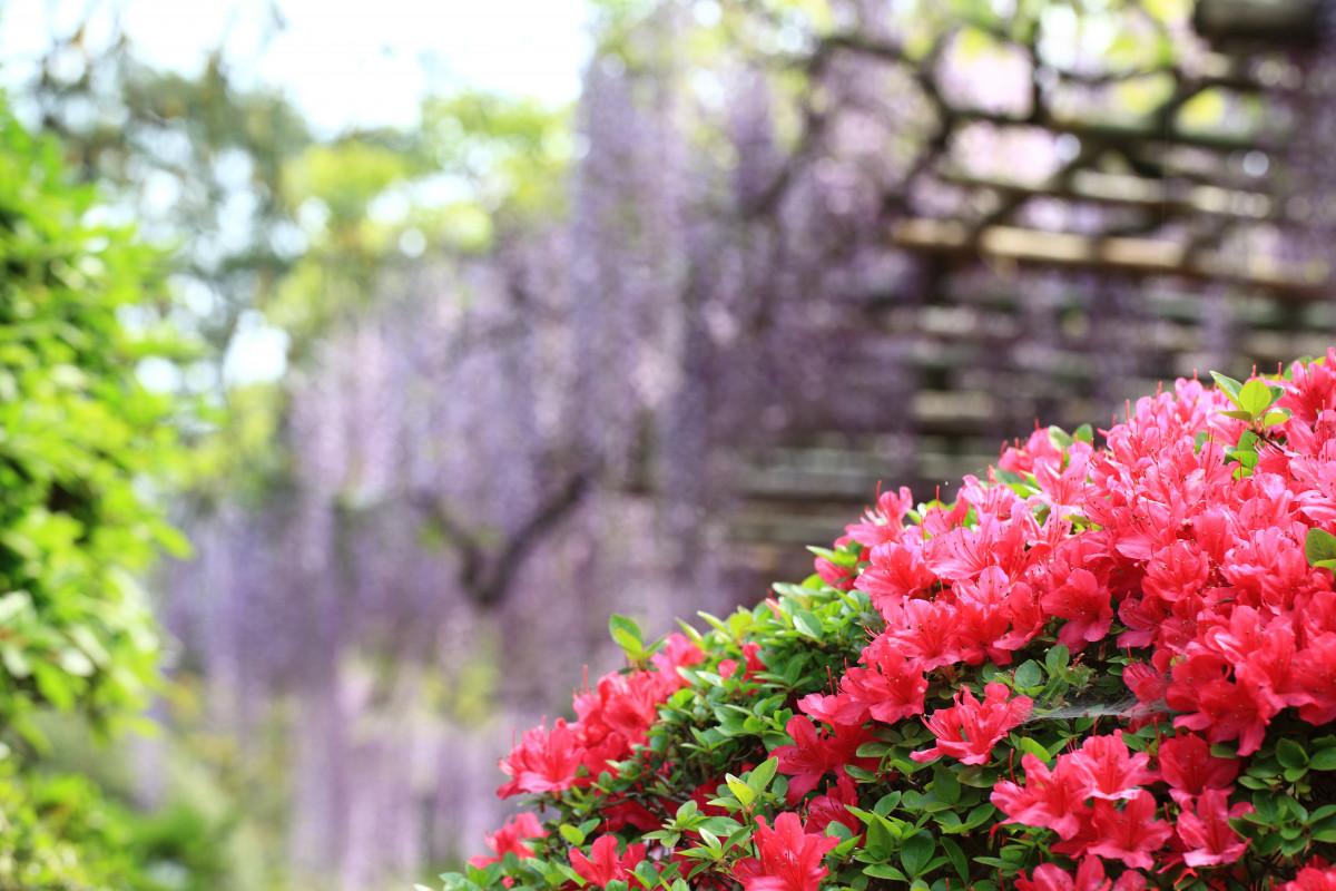 Адлере, купить цветы и кустарники ботанический сад владивосток