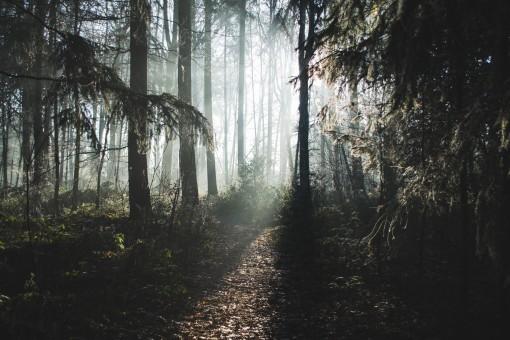 Free Images Landscape Tree Nature Forest Plant Fog