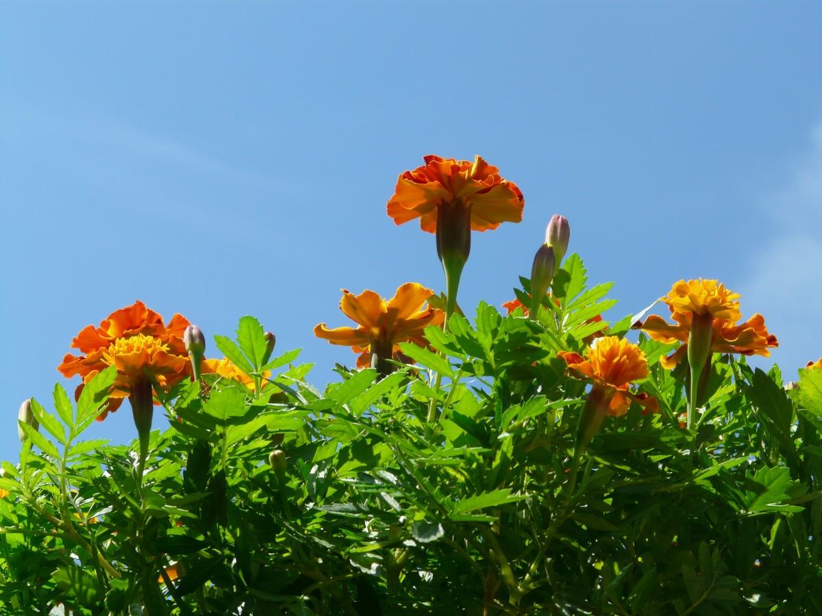 Nature Blossom Plant Sky Field Meadow