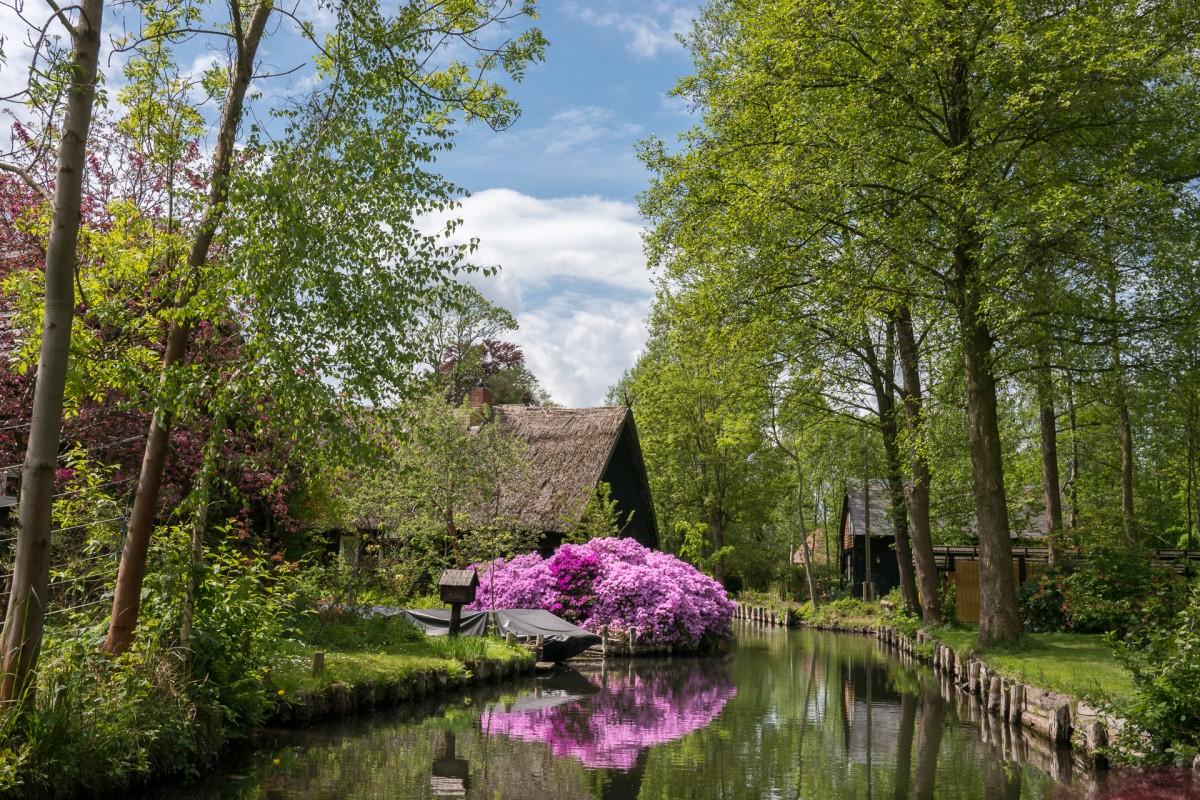 Images gratuites arbre fleur feuille tang l 39 automne for Jardin botanique gratuit 2015